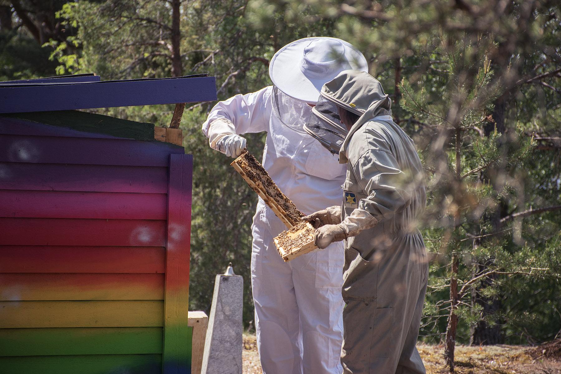 bi bikupor biologisk mångfald